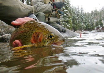 vail fly fishing